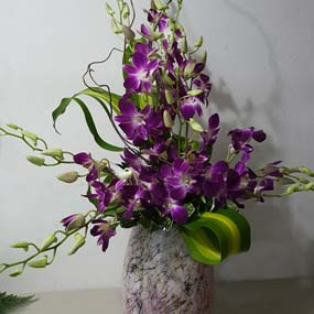 High Style Arrangements to Puerto Rico
