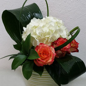 White Roses for Delivery in Puerto Rico